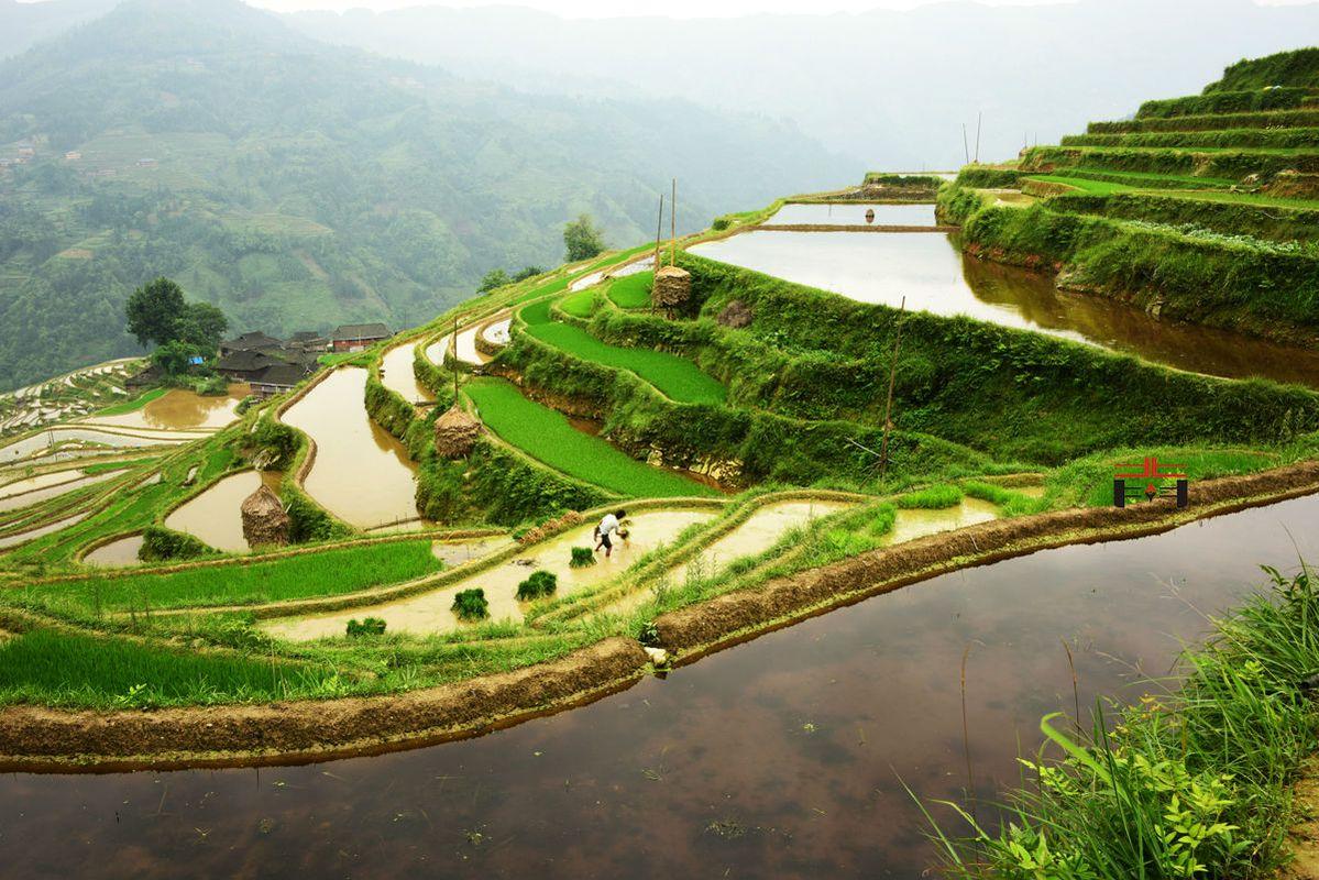初见加榜梯田,和梯田中端坐的村庄.图片