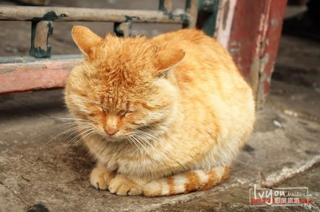 睡觉的胖猫图片