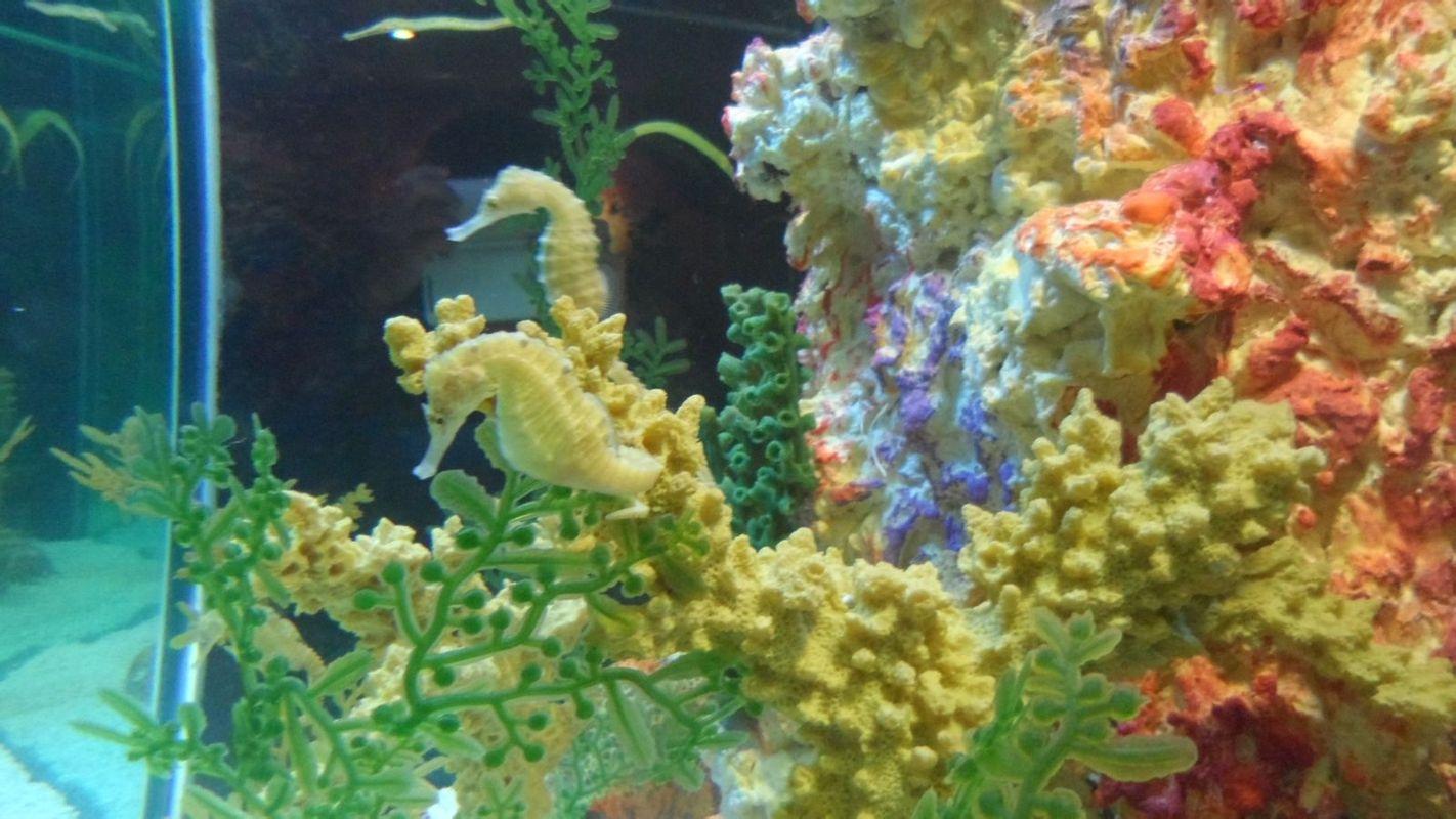 壁纸 海底 海底世界 海洋馆 水草 水生植物 水族馆 1422_800