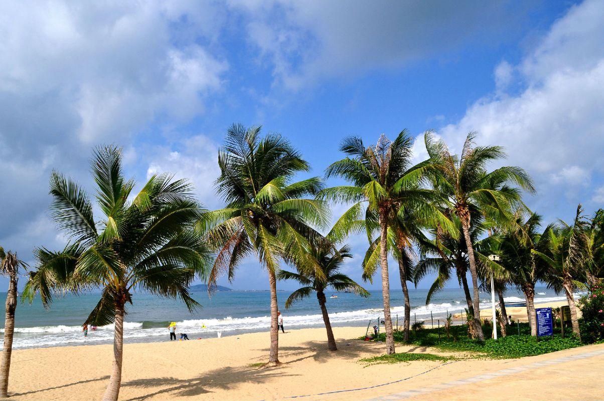 海边美丽的椰子树长廊.图片