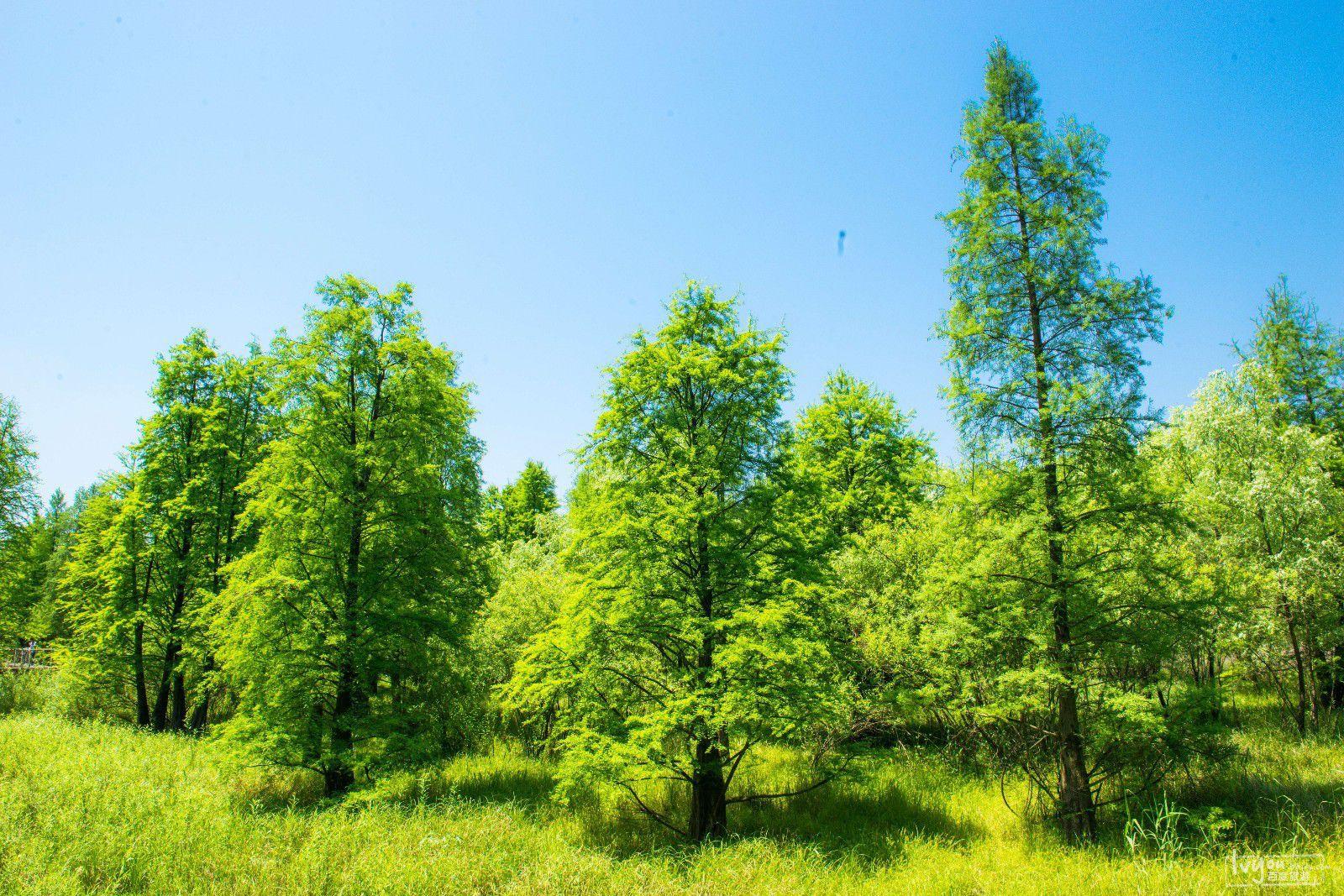 不仅有大片的松树,杉木林,竹林,茶园以及柑桔,杨梅,桃李等果林.