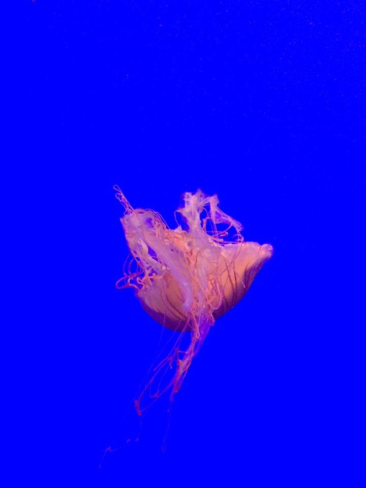 壁纸 动物 海底 海底世界 海洋馆 水族馆 鱼 鱼类 720_960 竖版 竖屏