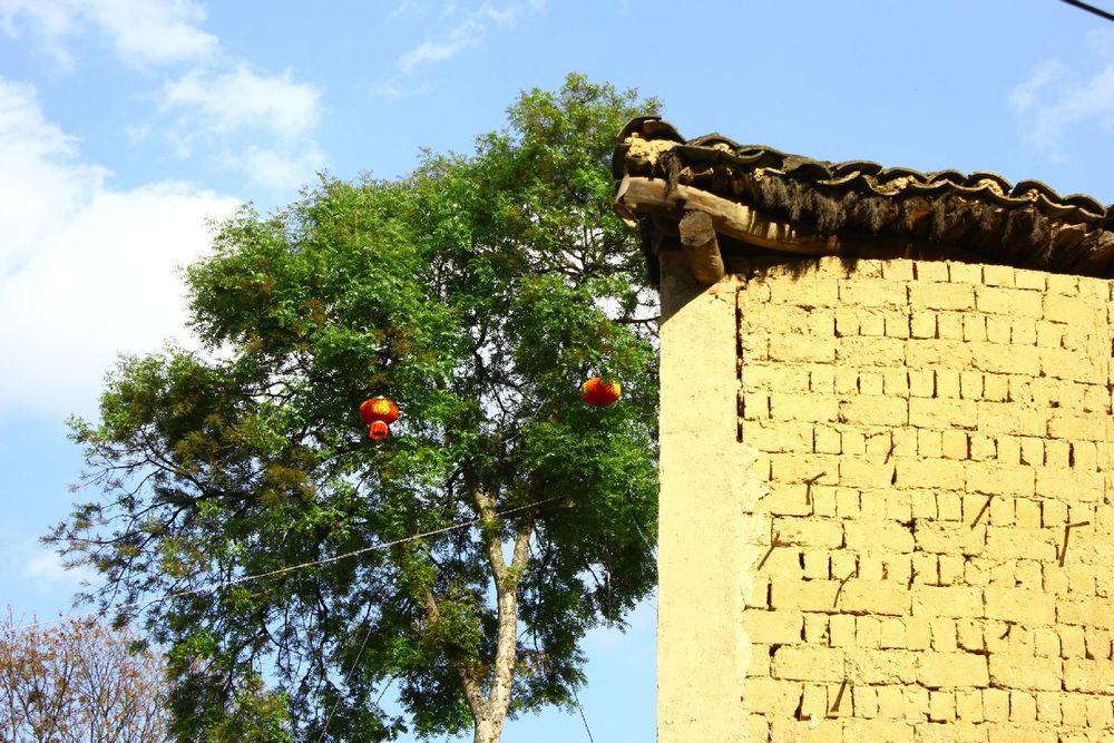 一棵大树一堵土墙一片蓝天这里就是这么美图片