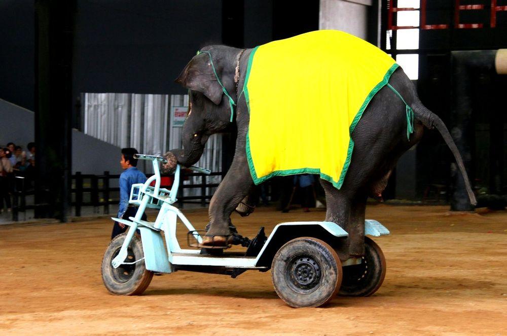 大象骑电动车图片