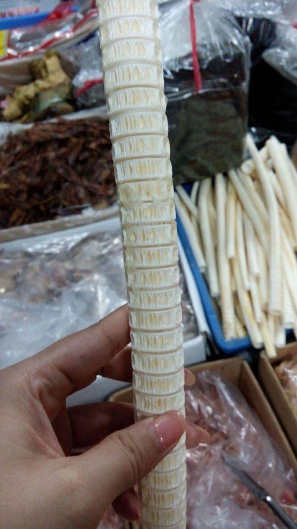 鲨鱼骨的结构好奇妙的图片