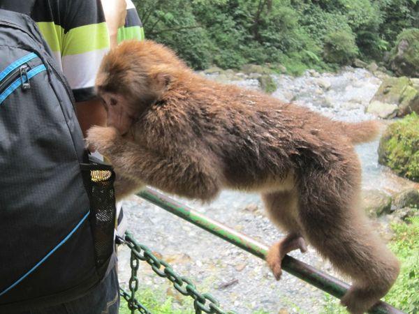 猴子太调皮了.图片