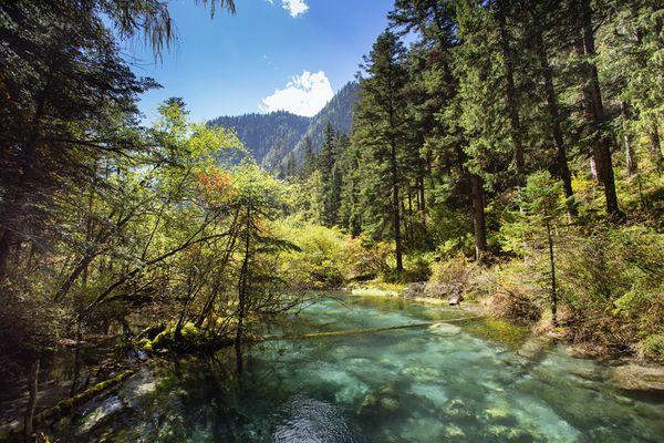 九寨沟溪流,在山谷间穿行,犹如童话世界图片