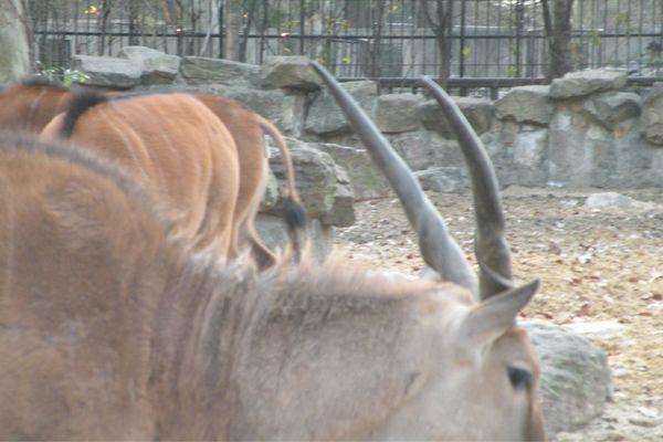 2010国庆北京动物园