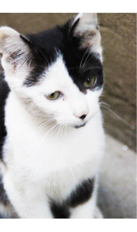 西塘的小猫咪,是不是很呆萌图片
