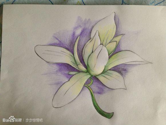 步步惊情里张晓画的木兰花高清大图