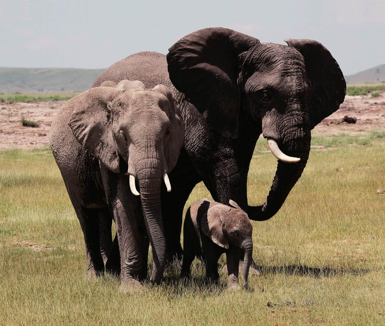 泰国的动物国宝