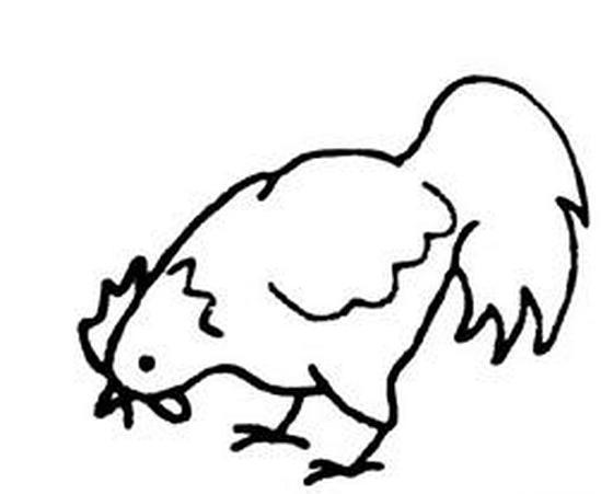 简笔画公鸡怎么画