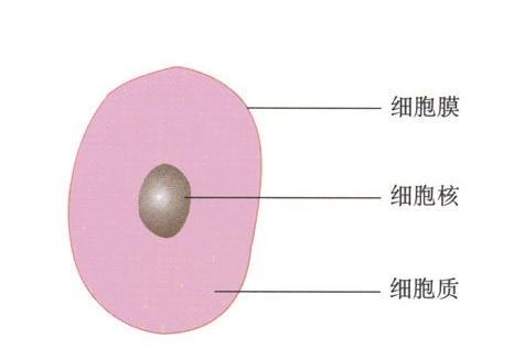 湖北黄冈初中生物实验考试显微镜.提示:各种细胞和黄瓜蚕豆叶根尖等等