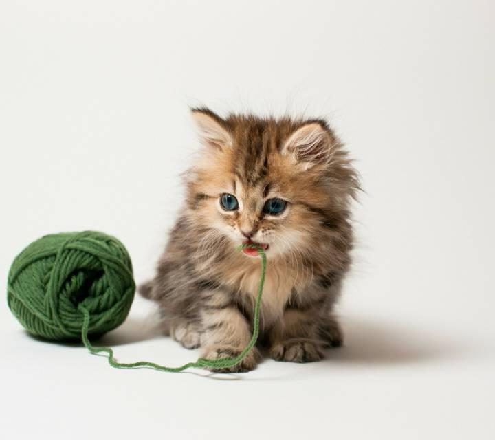 谁有超可爱的小猫图片,或者小狗图片.
