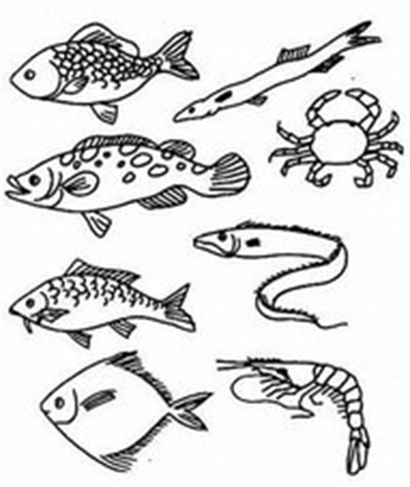 鱼虾的简笔画