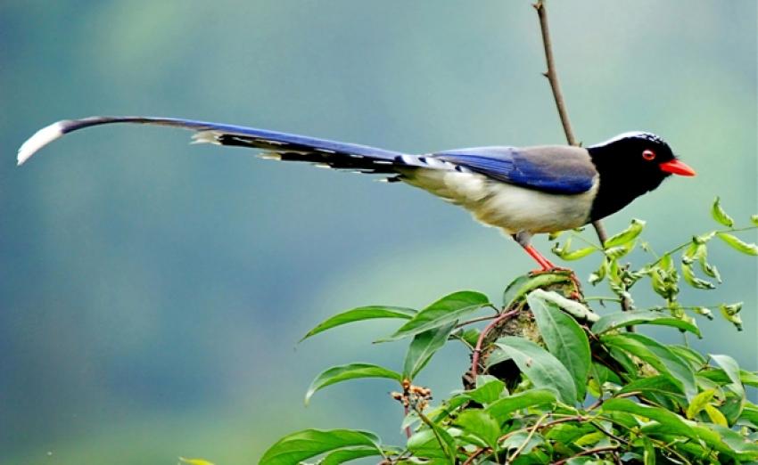 卵生. 鸟类的前肢进化成翼,成为能高度适应空中飞翔的动物.
