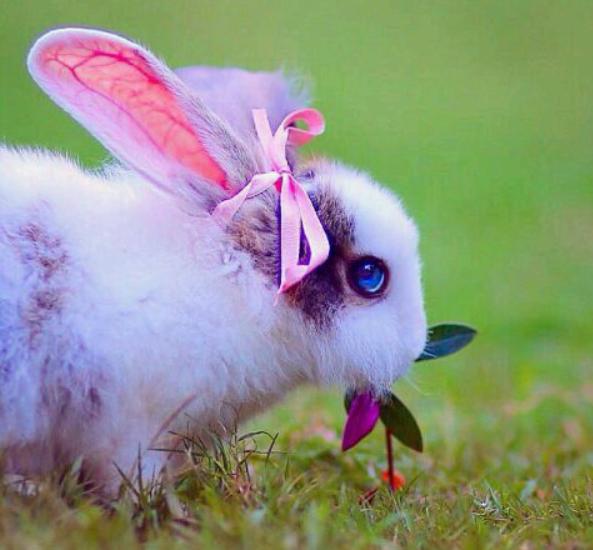 有蓝眼睛的兔子吗?
