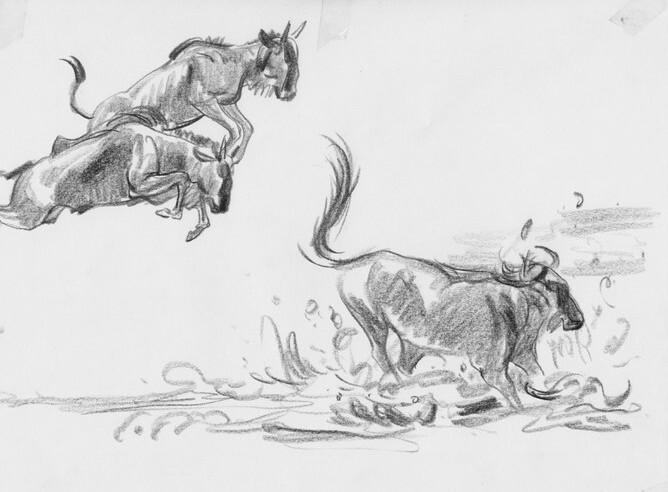 动物速写图片高清晰