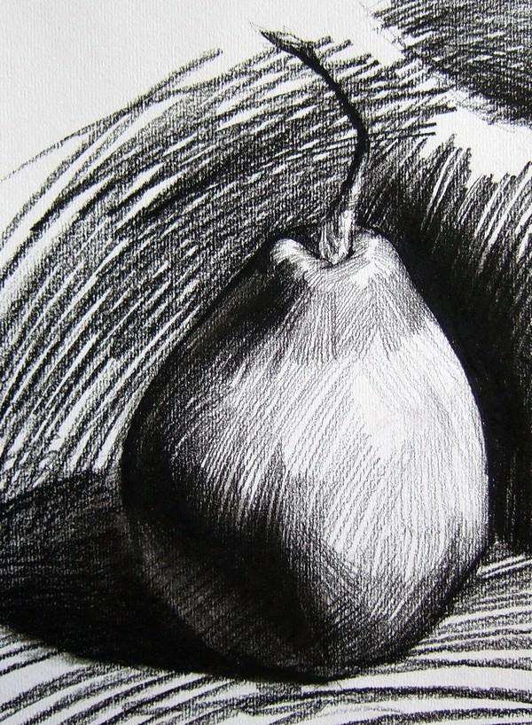 梨的素描图片