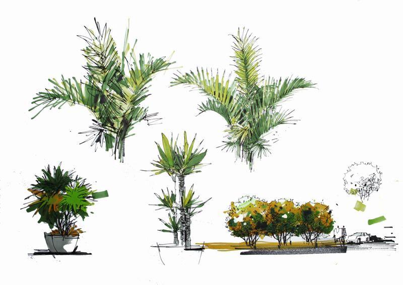 急求室外手绘单体植物效果图.