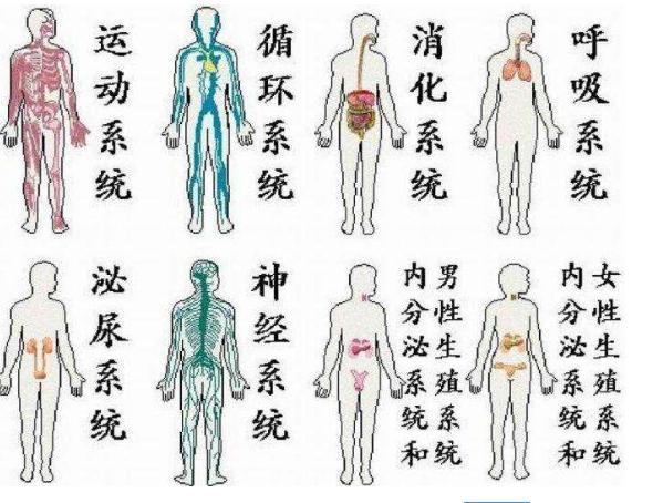 生物人体结构_初中生物人体系统七大结构有哪些