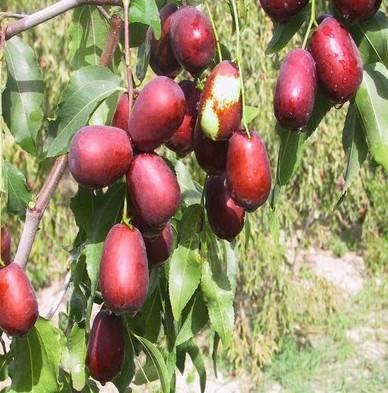 壁纸 矢量 水果 小果 植物 388_393