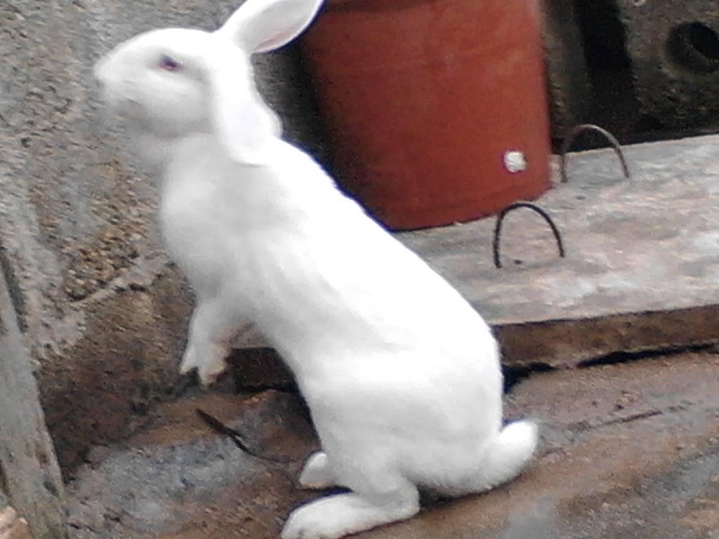 动物手型图片库 兔子的手怎么画