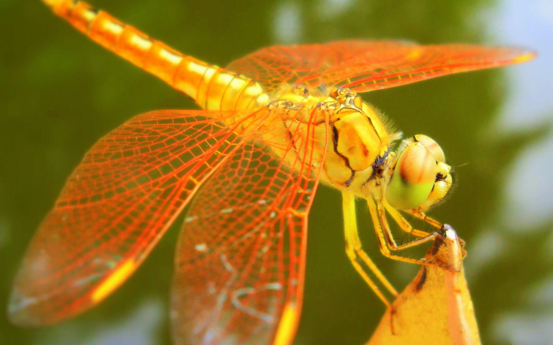 """展开全部 你说的应该是东北话中""""马(一声)冷(一声)"""",是指昆虫蜻蜓.图片"""