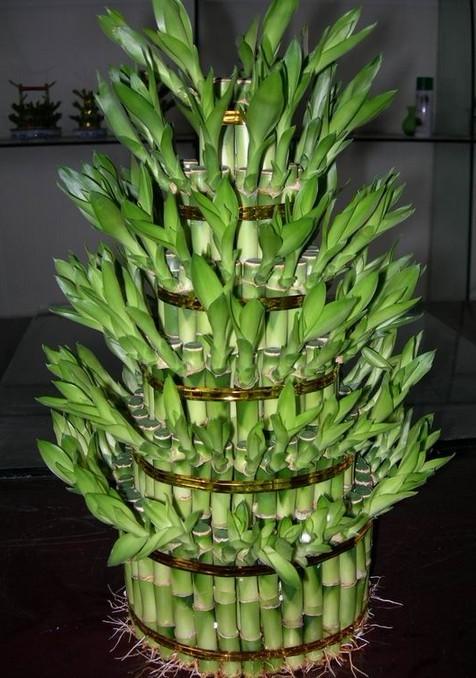 家里买的竹子盆栽需要多久浇一次水?具体还要做什么?