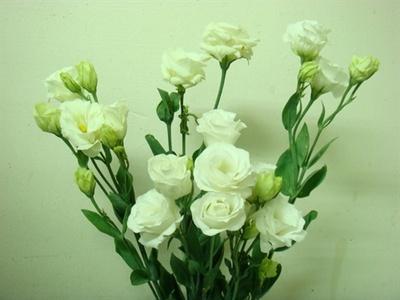壁纸 花 花束 鲜花 桌面 400_300