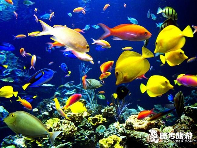 青岛水族馆的海洋动物