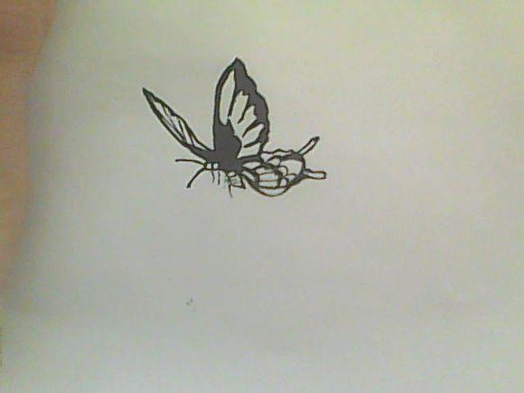 求手绘蝴蝶图片