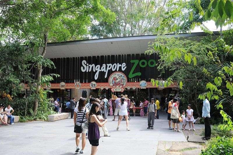 新加坡动物园(Singapore Zoo)位于新加坡北部的万里湖路,占地28.3公顷,采用全开放式的模式,是世界十大动物园之一。园内以天然屏障代替栅栏,为各种动物创造天然的生活环境,有300多个品种约3050只动物在没有人为屏障的舒适环境下过着自由自在的生活,与游客和平共处。每年约160万人次的国内外游客参观。  新加坡动物园(Singapore Zoo)位于新加坡北部的万里湖路,占地28.