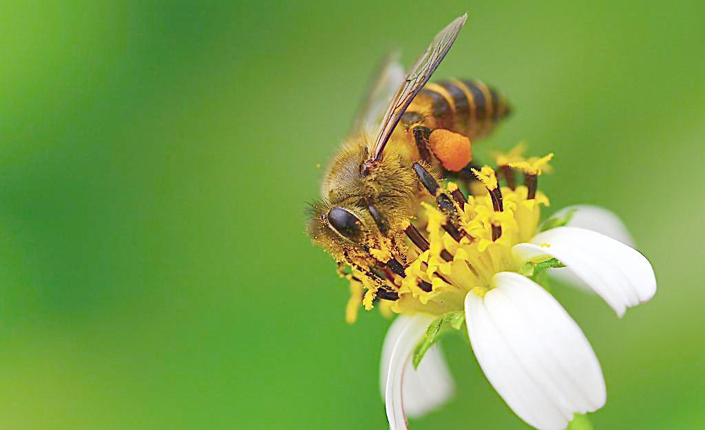 蜜蜂蜇人后自己也死掉?超凡蜘蛛侠女主角演讲图片