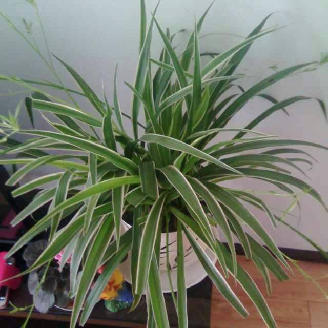 qq植物头像图片大全