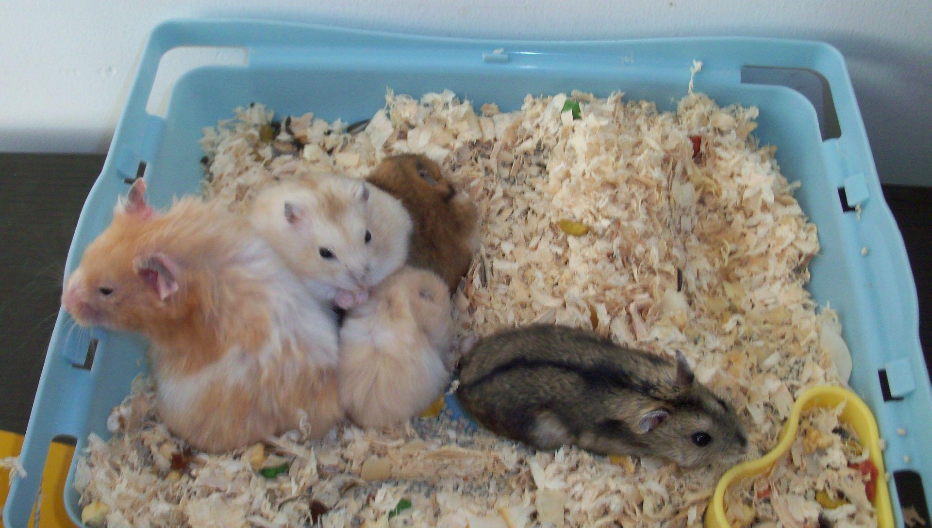 只要能让仓鼠舒服就行了,笼子的话最好去买个鼠笼,不能用纸盒(会啃)