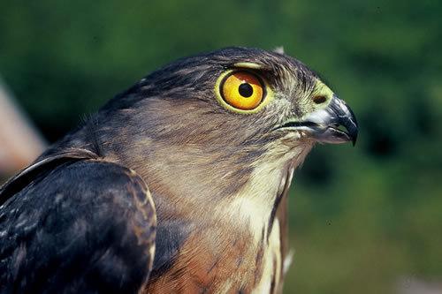 鹰科的生活习性