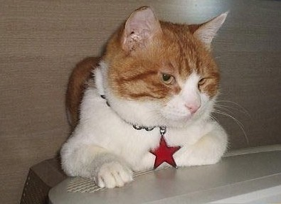 求猫猫名字(至少给8个名字)要有创意哦