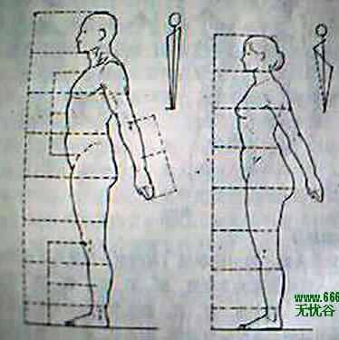 腿部骨骼结构构造图