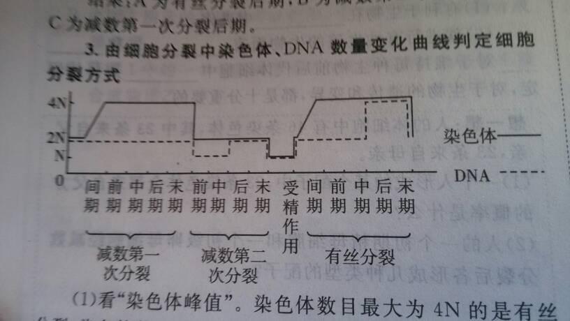 减数分裂与有丝分裂这图有没有错染色体与dna的线代数的教学设计图片