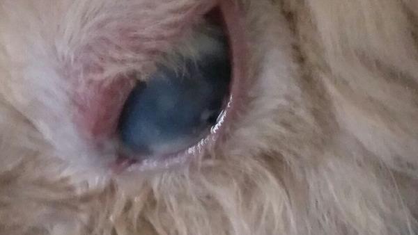 兔子的眼睛