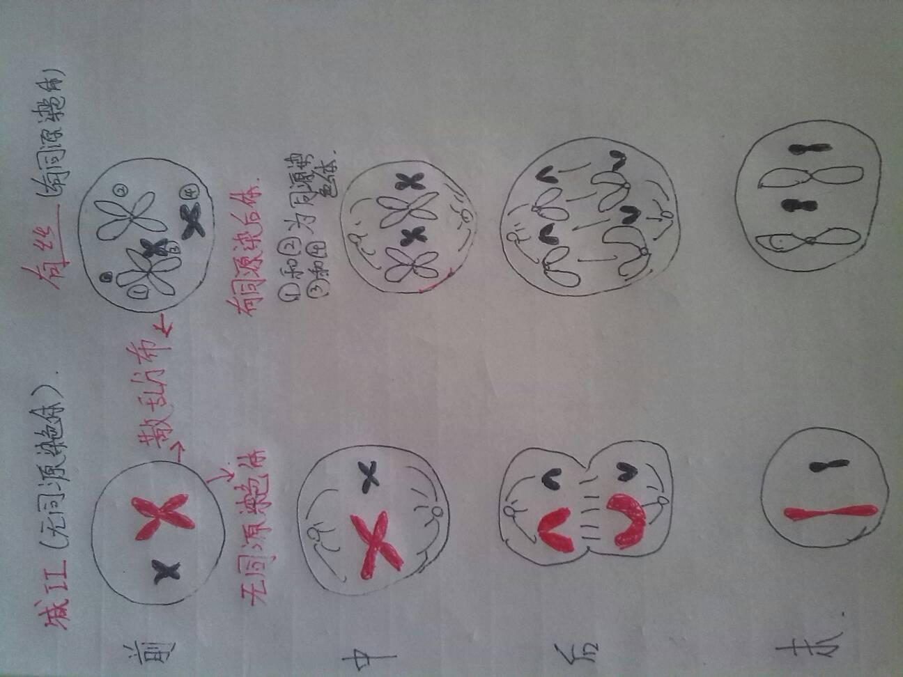 第二次减数分裂与有丝分裂的区别 求画图说明,谢谢