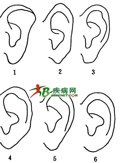 画耳朵的步骤图片