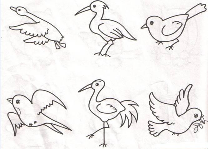 鸟的简笔画