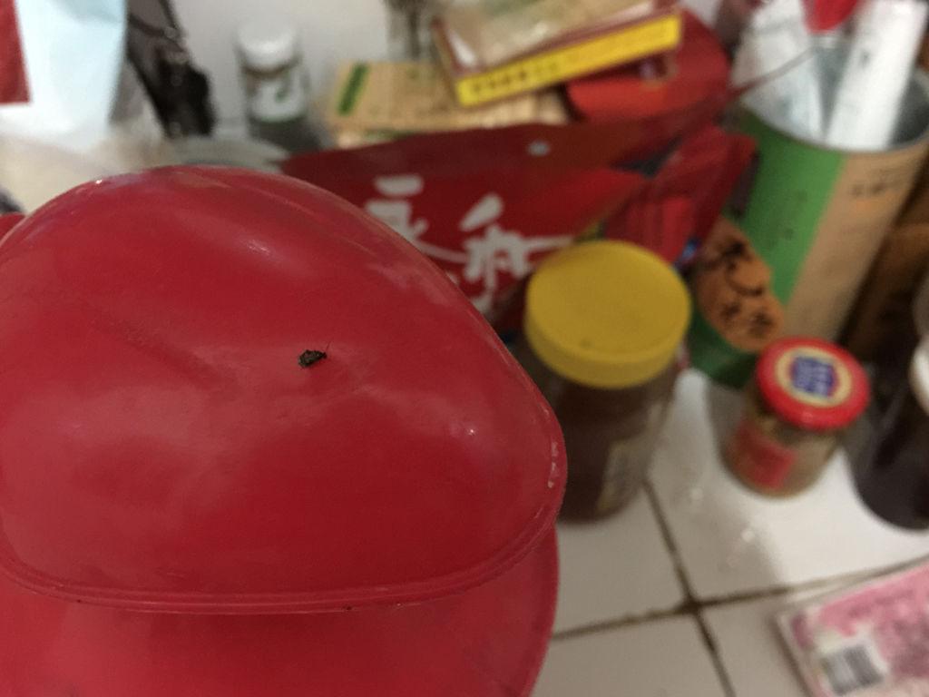 家里面特别是厨房,夏天好多这样的像糕点一样的小黑虫芝麻v厨房多久图片