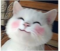 这个可爱的猫咪表情叫什么啊?图片