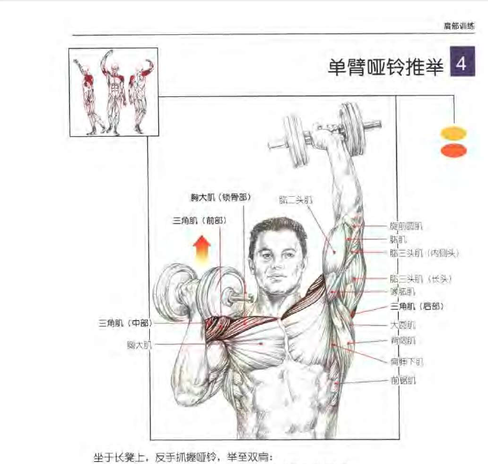 三角肌锻炼_从身体前方单臂上举,锻炼三角肌前束,胸大肌上部,斜方肌上部,前锯肌.