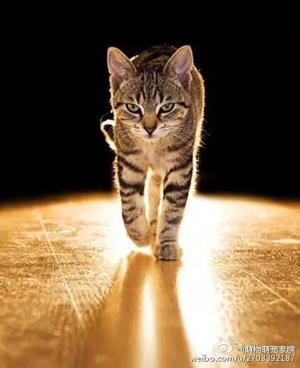 求一张壁纸,猫背影是老虎,那种感觉的类似的你懂的