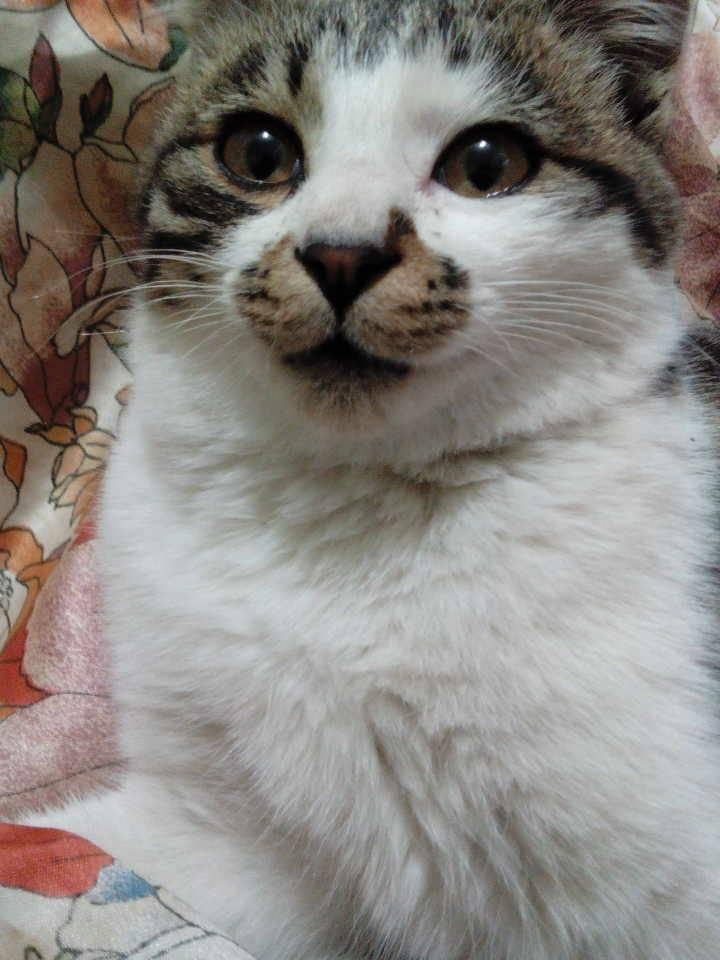 一只小猫的头像,脸正.可爱!