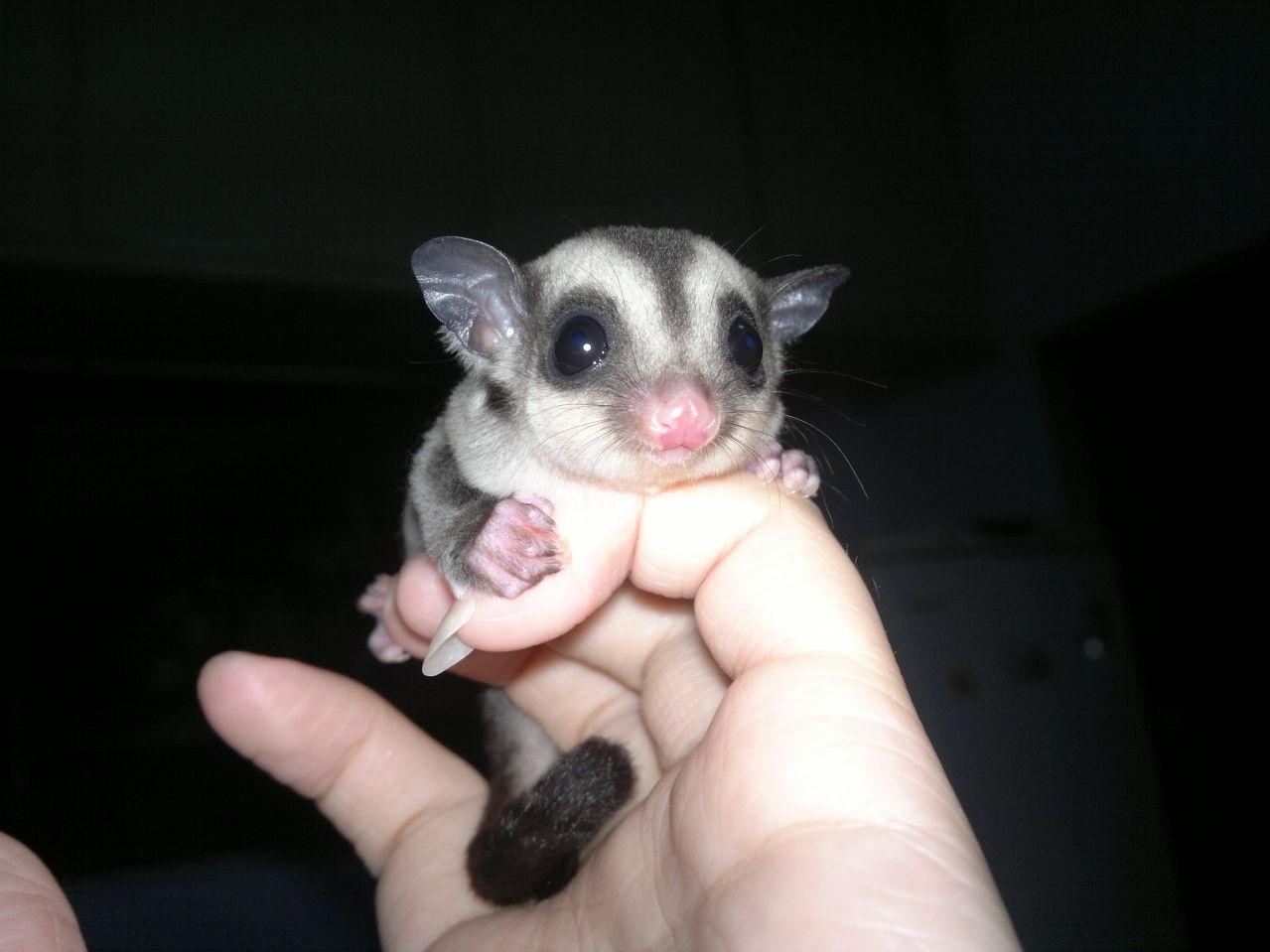 这是什么动物?好可爱哦
